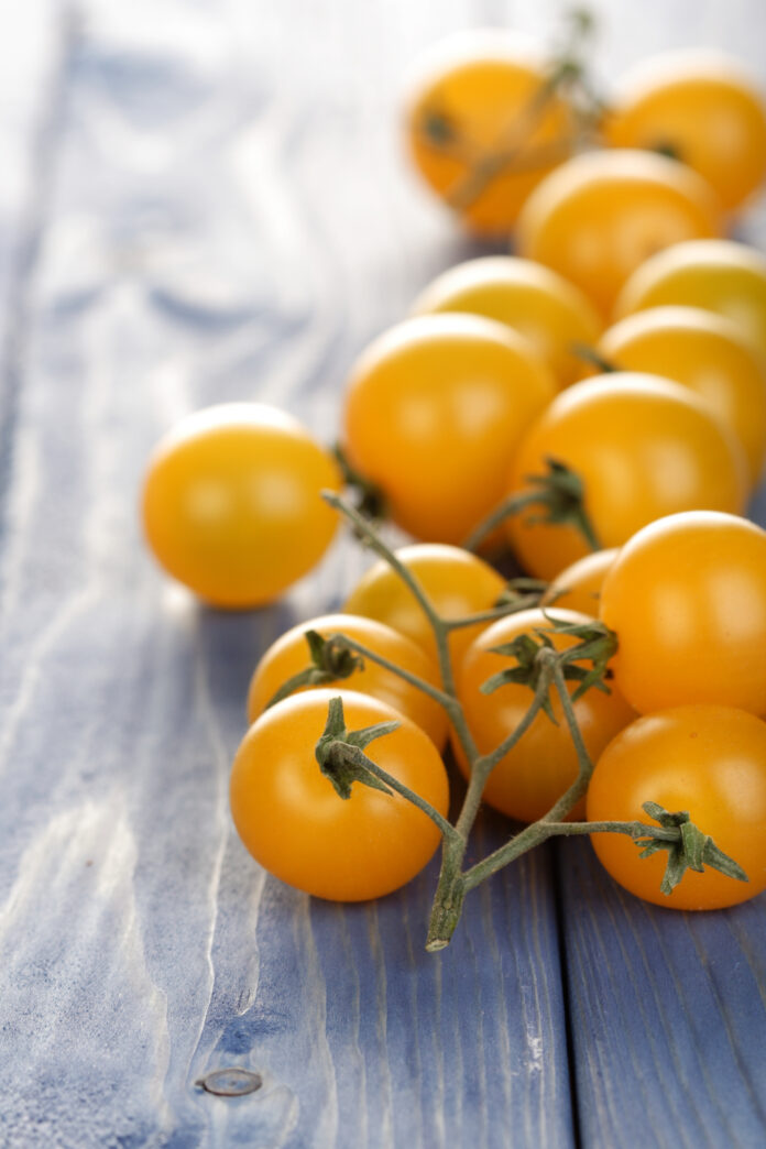 Sprzedaż hurtowa pomidora - ile można było zarobić?